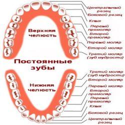 Прорезывание постоянных зубов
